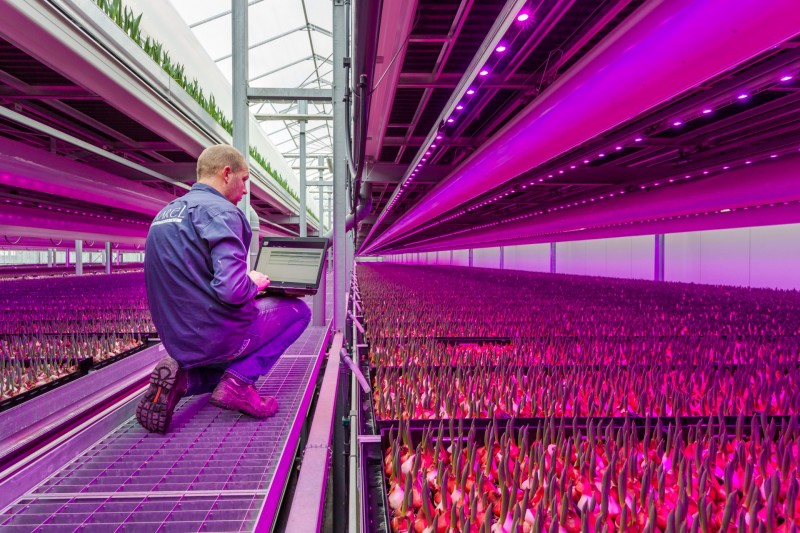 Philips Lighting Dynamic LED lighting light recipe Tulip Grower Karel Bolbloemen
